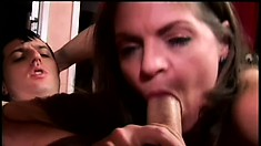 Amicable milf with huge knockers seduces sex-crazed gentleman