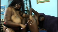 Chubby ebony lesbians munch each other's cunts in a hot session